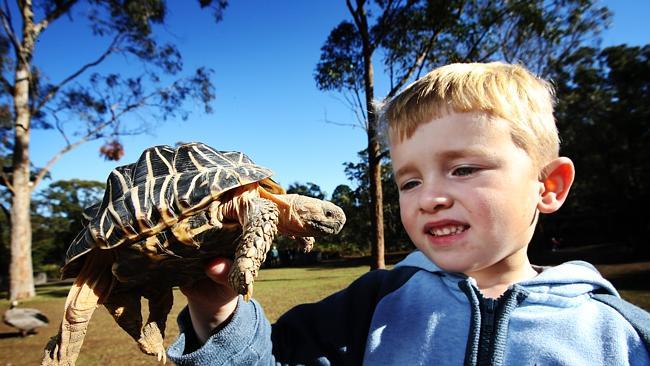 Новые методы австралийских зоологов по спасению редких черепах — через приложение на смартфоне!