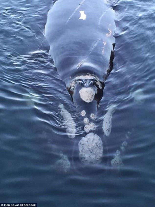 Группа рыбаков освободила кита и он не остался в долгу