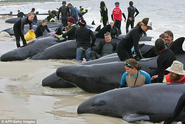 Найден мертвый кит редкой породы вблизи берегов Виктории в США