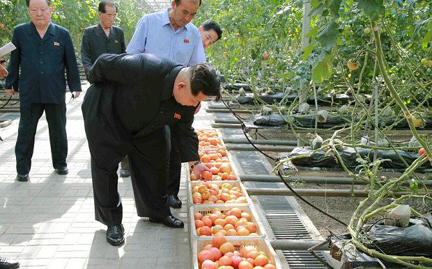 kim-jong-tomato_3367457b