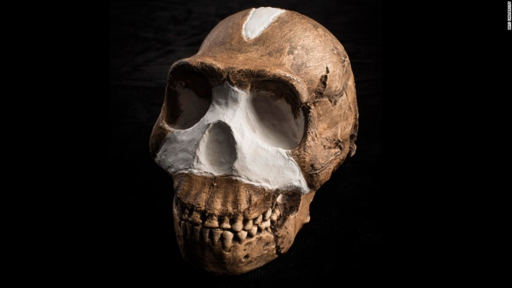 150910112025-restricted-homo-naledi-skull-closeup-wits-super-169