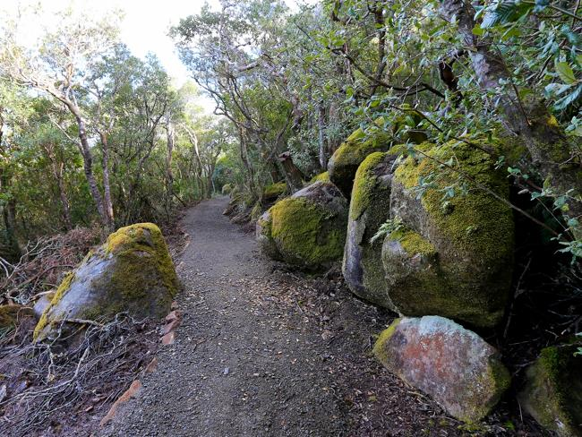 Новый пеший туристический маршрут в Тасмании откроется в январе