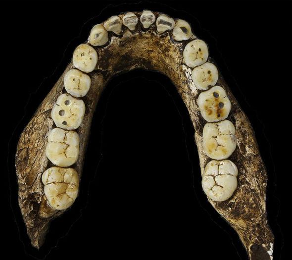 Обнаружены новые скелеты подвида Homo Naledi