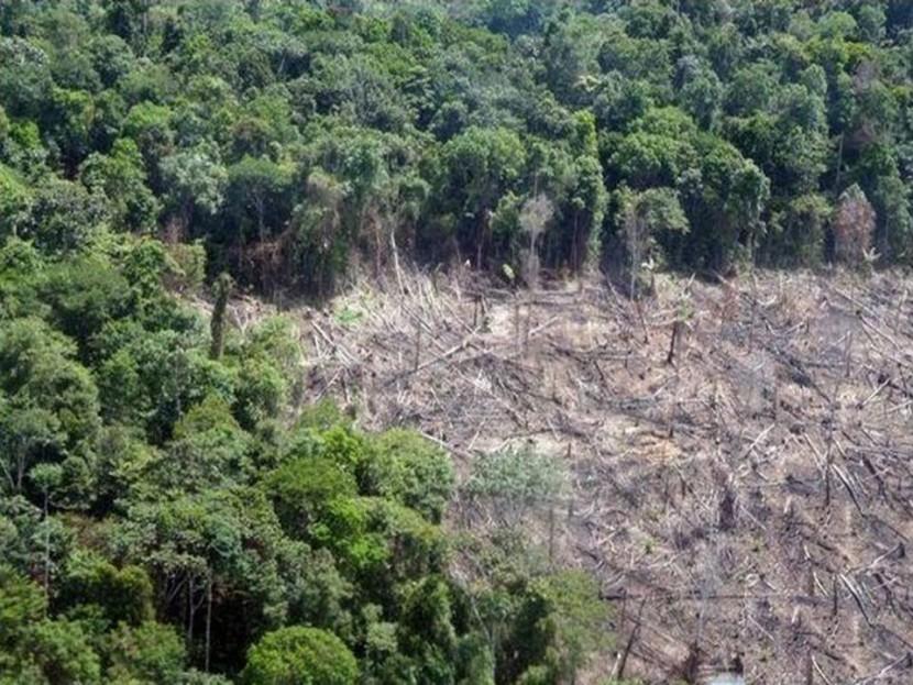 Вырубка лесов в Бразилии существенно снижается