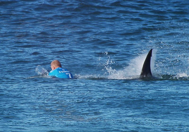 В Австралии запустят дронов под воду для отслеживания деятельности акул