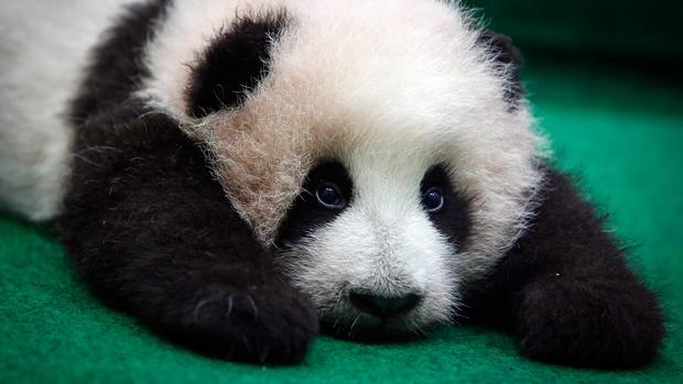 AP_145753589748-panda