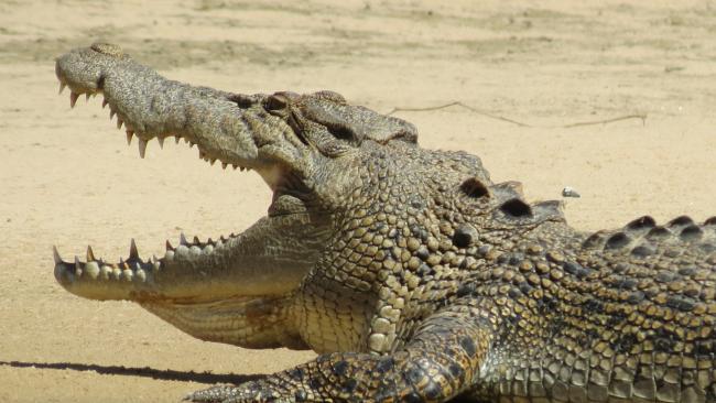Изменение климата наносит вред крокодилам