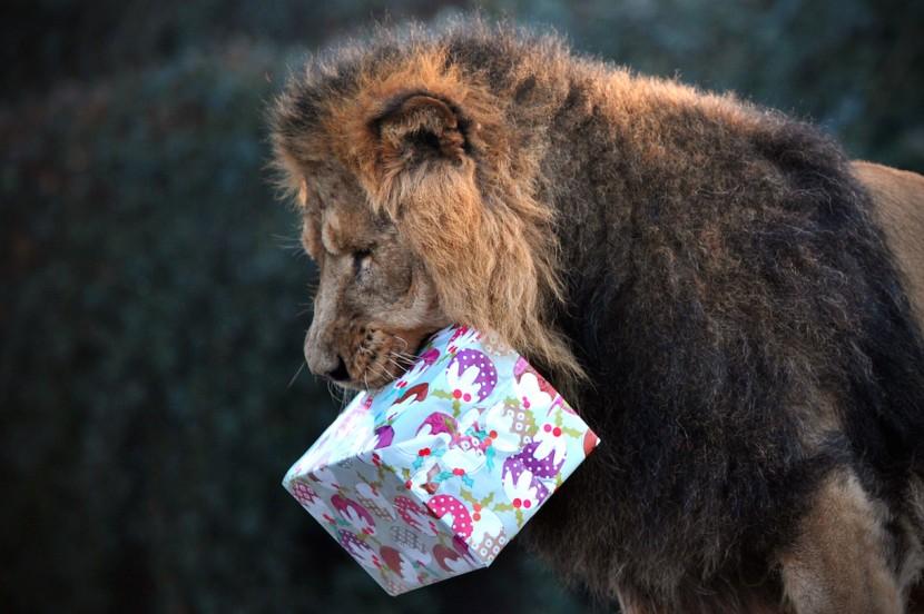В Лондонском зоопарке посетителям предлагают провести ночь со львами