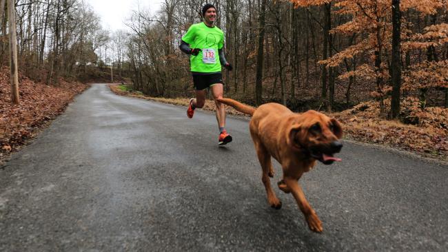 Собака заняла 7 место в марафоне