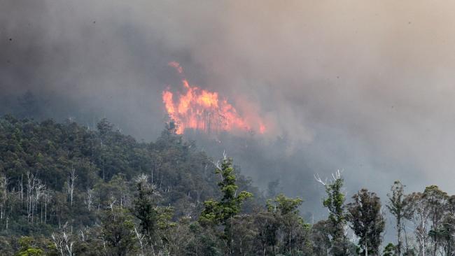 Тасмания горит