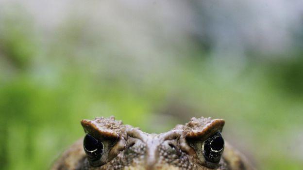 Во Флориде обнаружены нильские крокодилы-людоеды