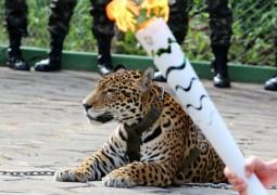 В Бразилии застрелили символ Олимпиады