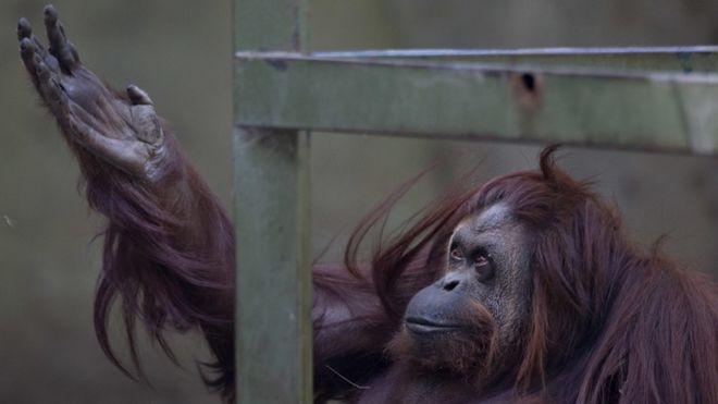 В Буэнос-Айресе закроют скандальный зоопарк