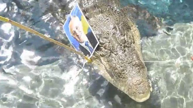 Крокодил предсказал победу либералов на парламентских выборах
