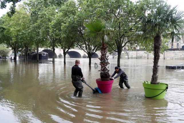 Workers remove palm trees from the banks as high waters causes flooding along the Seine River in Paris