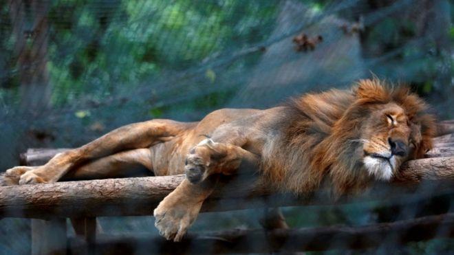 В зоопарках Венесуэлы животные погибают от голода
