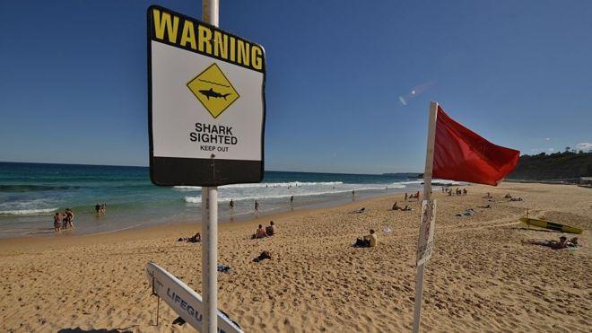 В Австралии ищут новые способы для защиты от акул