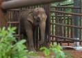 В Бразилии открыт первый в Латинской Америке приют для слонов
