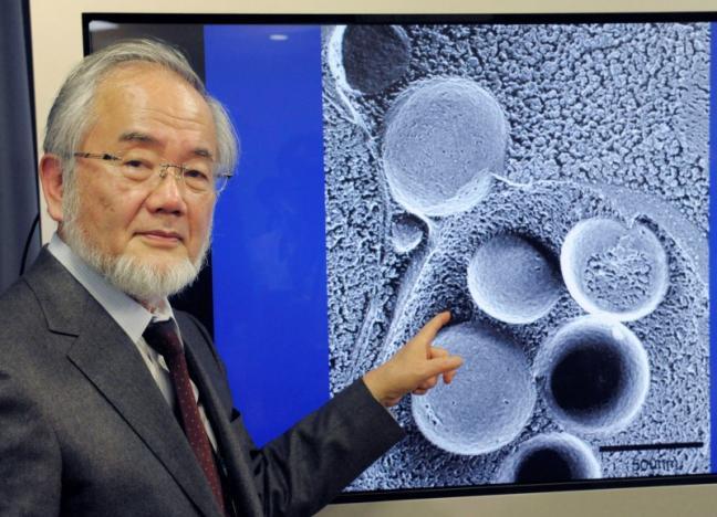 Йошинори Осуми был удостоен Нобелевской премии в области медицины