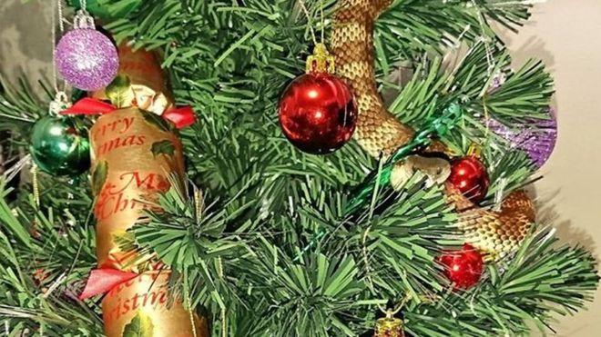 Австралийка обнаружила на рождественской елке ядовитую змею