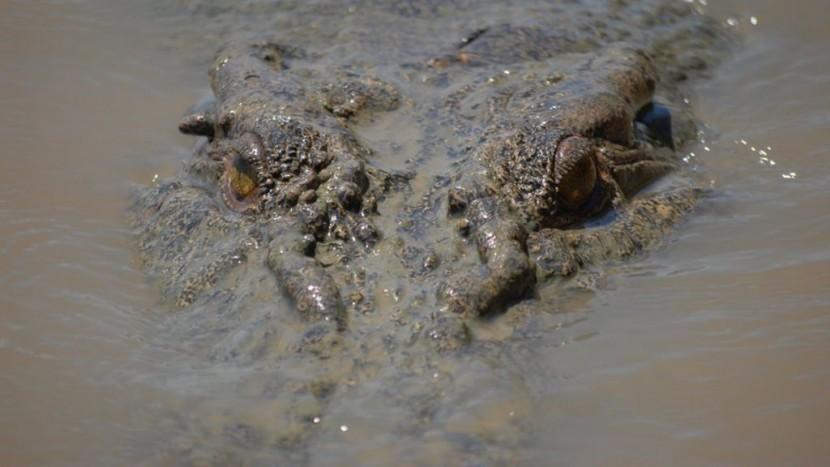 В Австралии крокодил убил человека