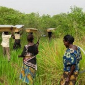 В Зимбабве действует расистская земельная программа