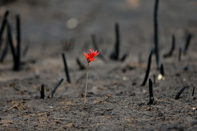 Пожары в Чили побеждены