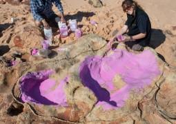 Следы динозавров обнаружили в Австралии