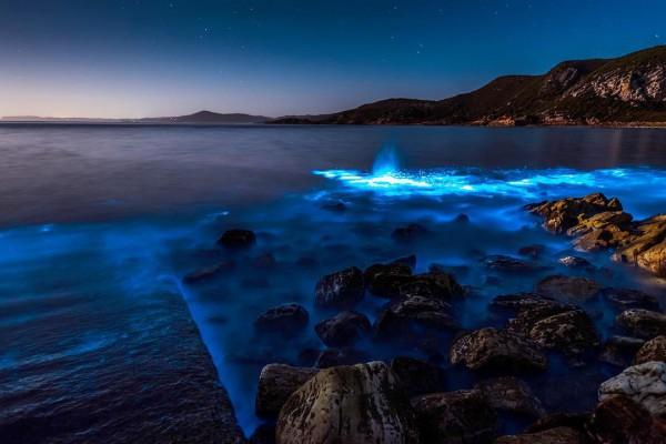 В Австралии залив засиял неоновым светом