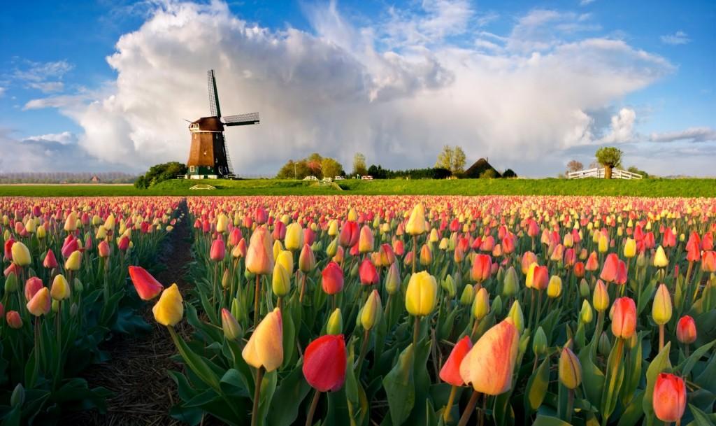1389787706_holland