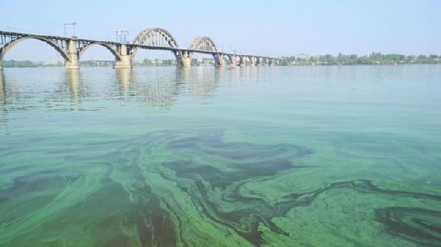 В Украине получилось добывать газ из водорослей