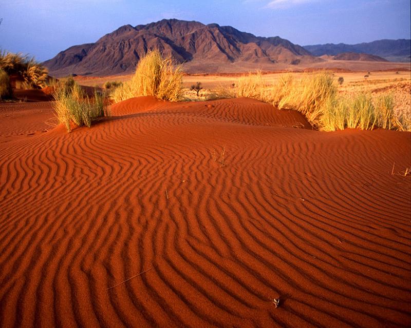Природа Узбекистана. Живая пустыня Кызылкум
