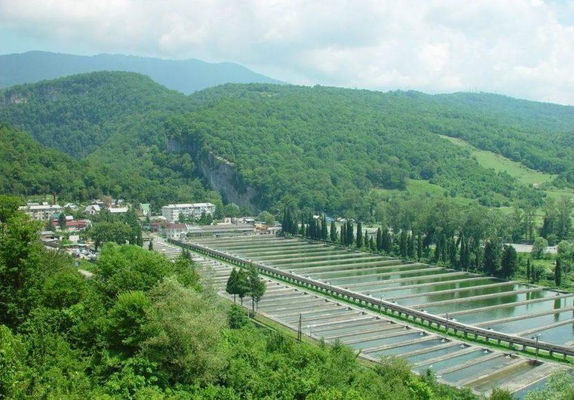 Что посетить в Адлере: ТОП-10 мест