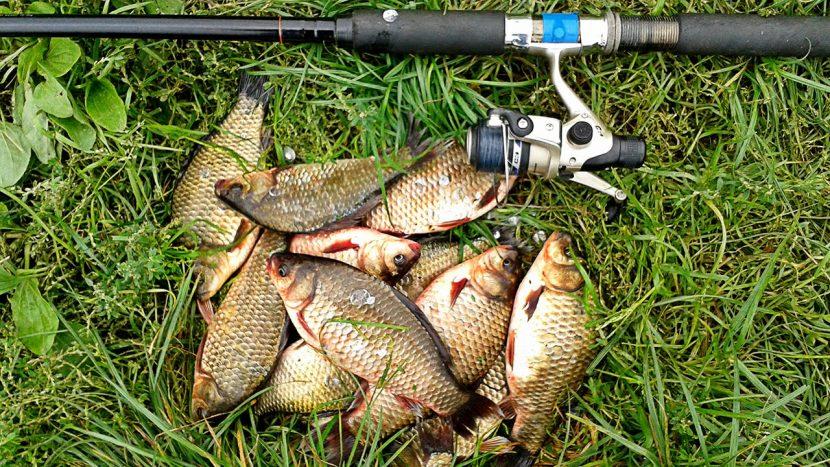 Эффективная рыбалка. Прикормки для рыбы от производителя